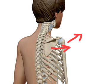 肩関節、肩甲骨のズレ